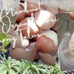 cara membuat pupuk organik dari cangkang telur