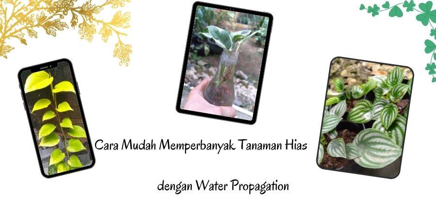 Cara Mudah Memperbanyak Tanaman Hias dengan Water Propagation