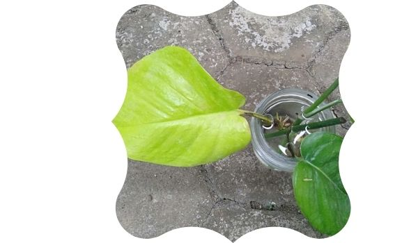 tips water propagation